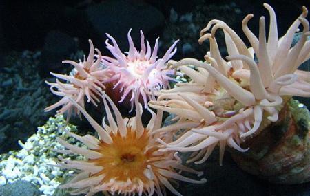 Osaka Aquarium Kaiyukan, Osaka