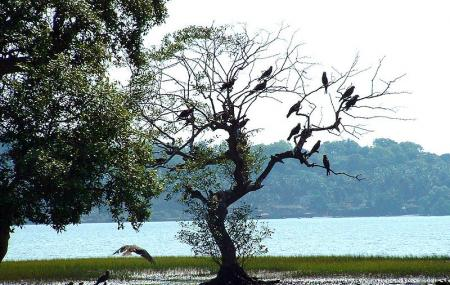 Dr Salim Ali Bird Sanctuary, Panaji