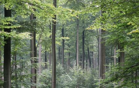 Sonian Forest, Brussels