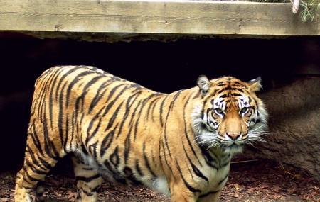 Toronto Zoo Image