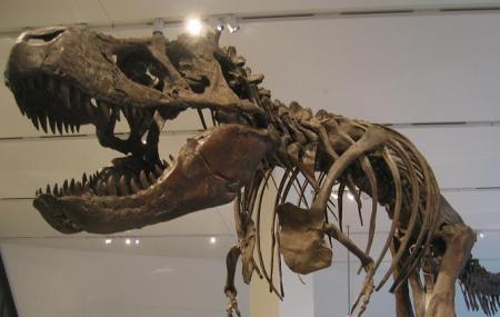 Royal Ontario Museum Image