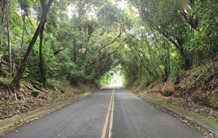 Nuuanu Valley Rain Forest Image