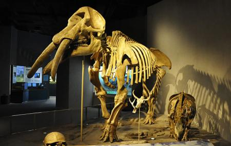 Denver Museum Of Nature And Science Image