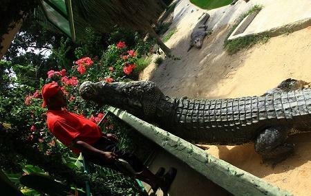 Crocodile Adventureland Langkawi, Langkawi Island