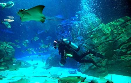 Ripley's Aquarium Of Canada Image