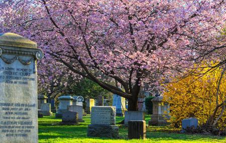 Mount Pleasant Cemetery Image