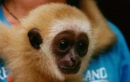 Gibbon Rehabilitation Project, Phuket