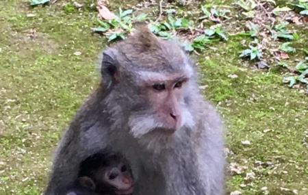 Sangeh Monkey Forest, Bali