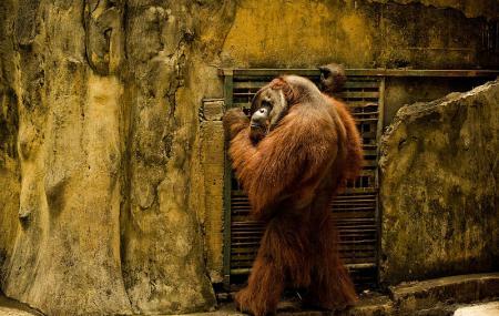 Bali Zoo Image