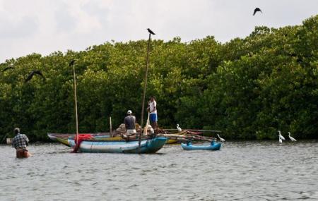 Muthurajawela Marsh, Negombo