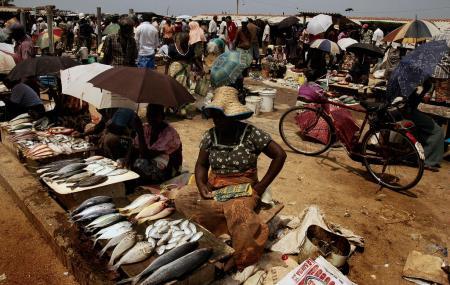 Main Fish Market, Negombo