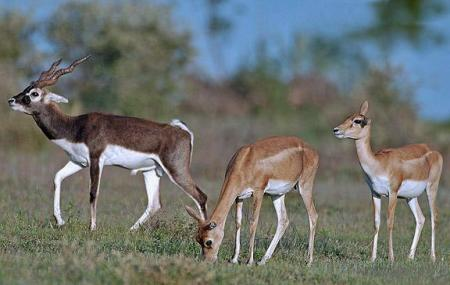 Mahavir Harina Vanasthali National Park, Hyderabad