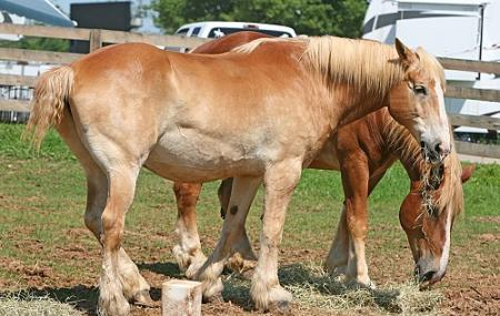 Kentucky Horse Park Image