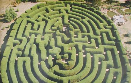 Wandiligong Maze And Cafe Image