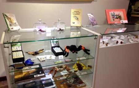 La Maison Des Papillons - Musee Dany Lartigue Image