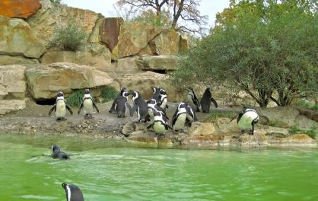 Berlin Zoo Image