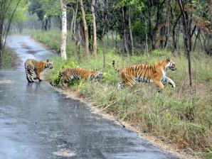 Bannergatta National Park, Bengaluru