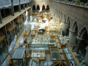 Oxford University Museum Of Natural History, Oxford