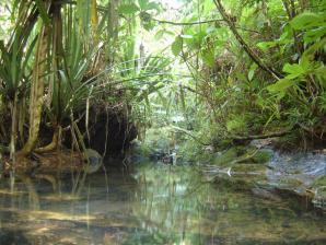 Colo-i-suva Forest Reserve, Suva