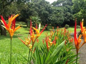 Botanical Orchid Garden, Alajuela