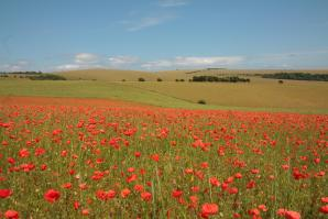 Ditchling Beacon, Hove
