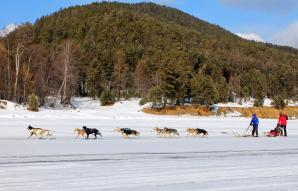 Baikal Dog Sledding Centre, Listvyanka
