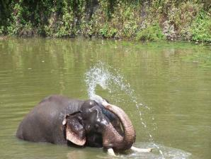 Elephant Junction, Thekkady