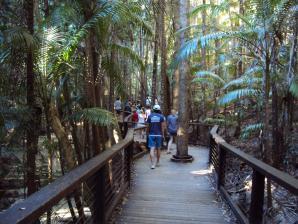 Central Station And Wanggoolba Creek, Fraser Island