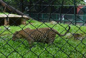 Thiruvananthapuram Zoo, Trivandrum