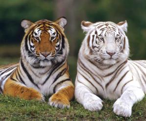 National Zoological Gardens Of Sri Lanka, Colombo