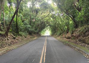Nuuanu Valley Rain Forest, Honolulu