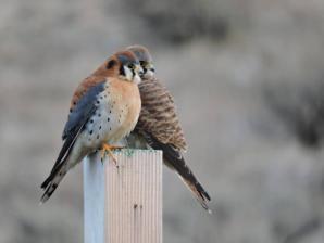 World Center For Birds Of Prey, Boise