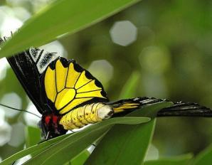 Butterfly Creek, Auckland