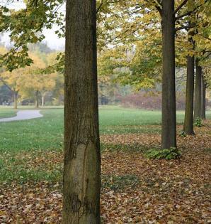 North Park, Milan