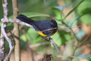 Curi Cancha Reserve, Monteverde